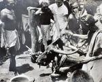 Buffalo sacrifice, Bisipara Village, Orissa, 1950s