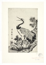 Crane and chicks in a nest on a pine tree